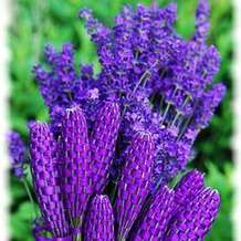Lavender-wand-making-1486592518