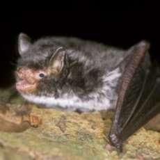 Baddesley-bat-walks-1583525693