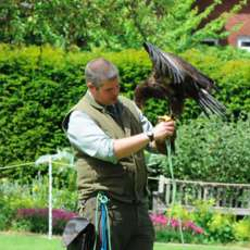 Falconry-day-1520630761