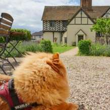 Trail-for-dogs-bring-your-dog-to-blakesley-hall-1574934080