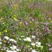 Marvellous-meadows-1498897182