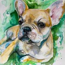 Paint-your-own-pet-portrait-3-week-workshop-1549549819
