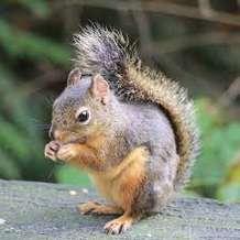 Felt-squirrel-workshop-1569928395
