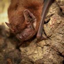 Listening-to-bats-1535572171