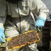Bee-keeping-course-1484689109