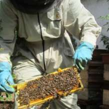 Bee-keeping-course-1511122262