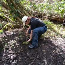 Moseley-bog-joy-s-wood-volunteer-day-1478725224