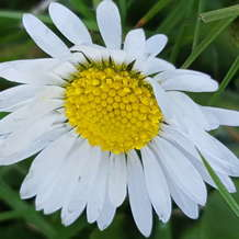 Own-your-uniqueness-how-to-be-true-to-yourself-1526568803