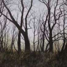 Trees-in-graphite-1561755010
