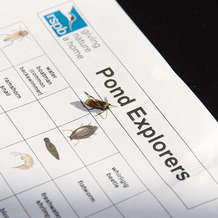 Guided-pond-dipping-at-rspb-sandwell-1527318425