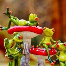 Box-of-frogs-drop-in-improv-workshop-1563221940