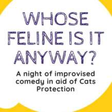 Whose-feline-is-it-anyway-1581196307