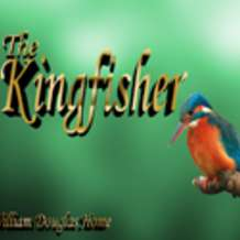 The-kingfisher-1374654409