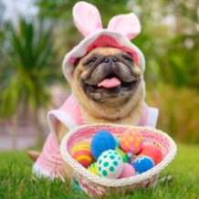 Easter-pup-party-1583146219