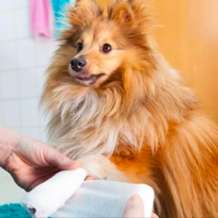 Pet-first-aid-1570793273