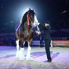 Horse-of-the-year-show-1489230073
