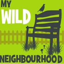 My-wild-neighbourhood-1541846314