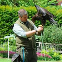Falconry-day-1581268341