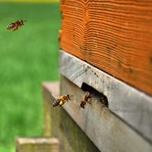 Introduction-to-beekeeping-workshop-1386495965