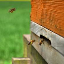 Introduction-to-beekeeping-workshop-1406409543