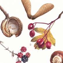 Pods-cones-and-seeds-in-watercolour-1534934664