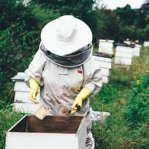 Introduction-to-beekeeping-1540460064